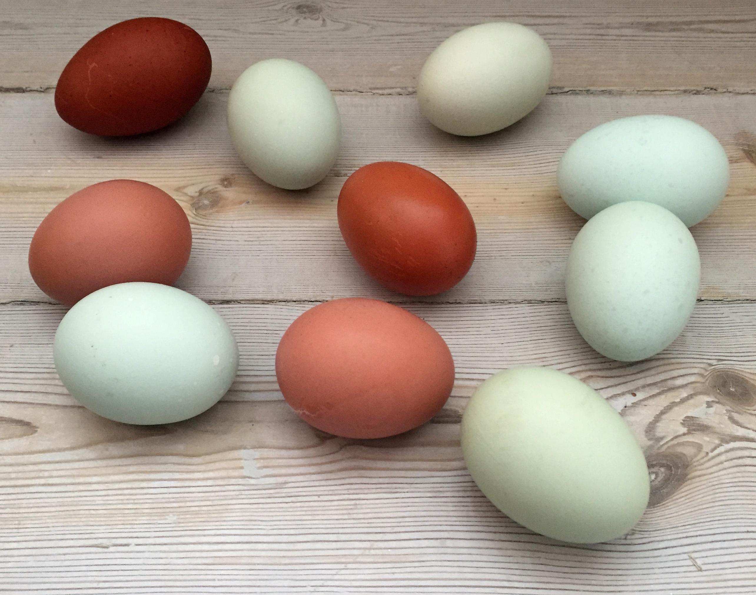 Hvem har besluttet, at æg kun må være hvide eller brune?